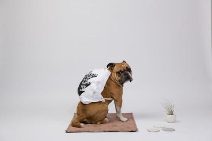 Hunde-Schmusedecke Outdoor